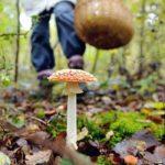 Отруєння грибами: профілактика і перша допомога